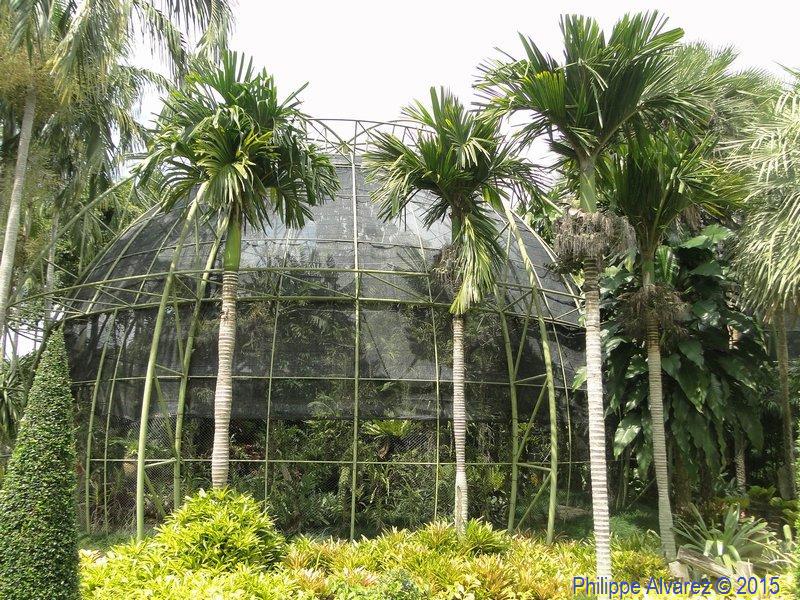 http://palmiers.eu/FDP/49-taweechon/002.jpg
