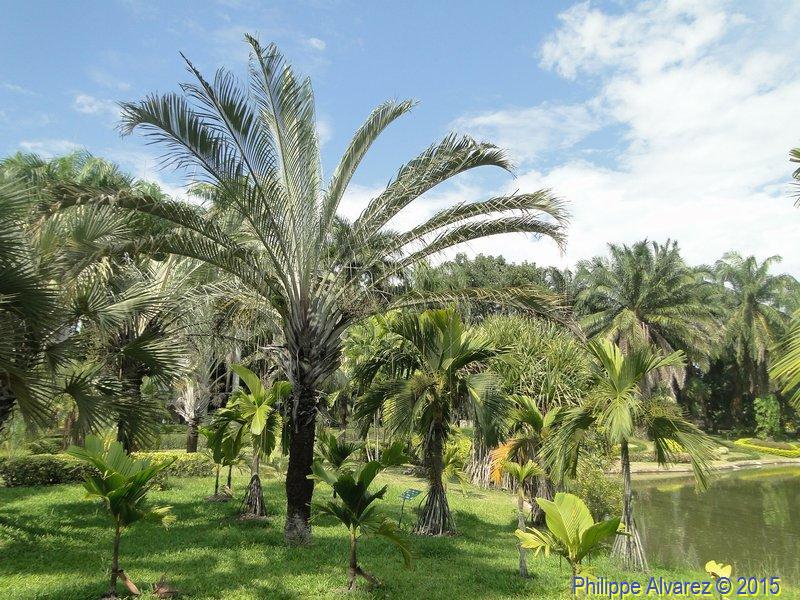 http://palmiers.eu/FDP/49-taweechon/058.jpg