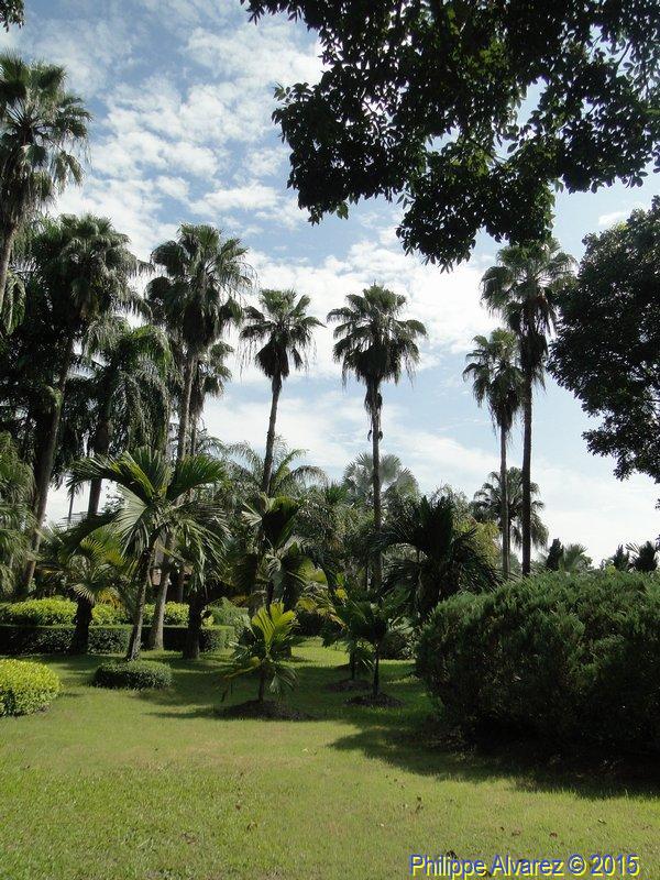 http://palmiers.eu/FDP/49-taweechon/064.jpg